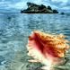 Shell In Tropical Sea Live Wal