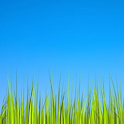 Grass LWP [Revamped]