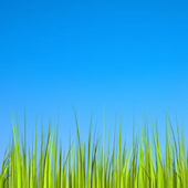 Grass Live Wallpaper [Free]