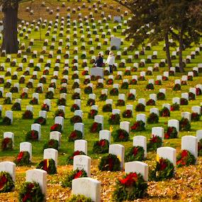 Wreaths in Arlington by Michelle Nolan - City,  Street & Park  Cemeteries ( holiday, memorial, cemetary, christmas, washington dc, arlington cemetary,  )