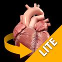 Heart 3D Anatomy Lite icon