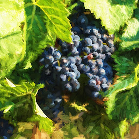 Wine on the Vine by Glenn Miller - Painting All Painting ( wine, oregon, red wine, grapes, harvest, pinot noir )