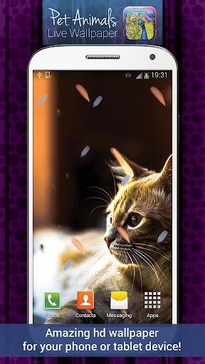 寵物動物動態壁紙