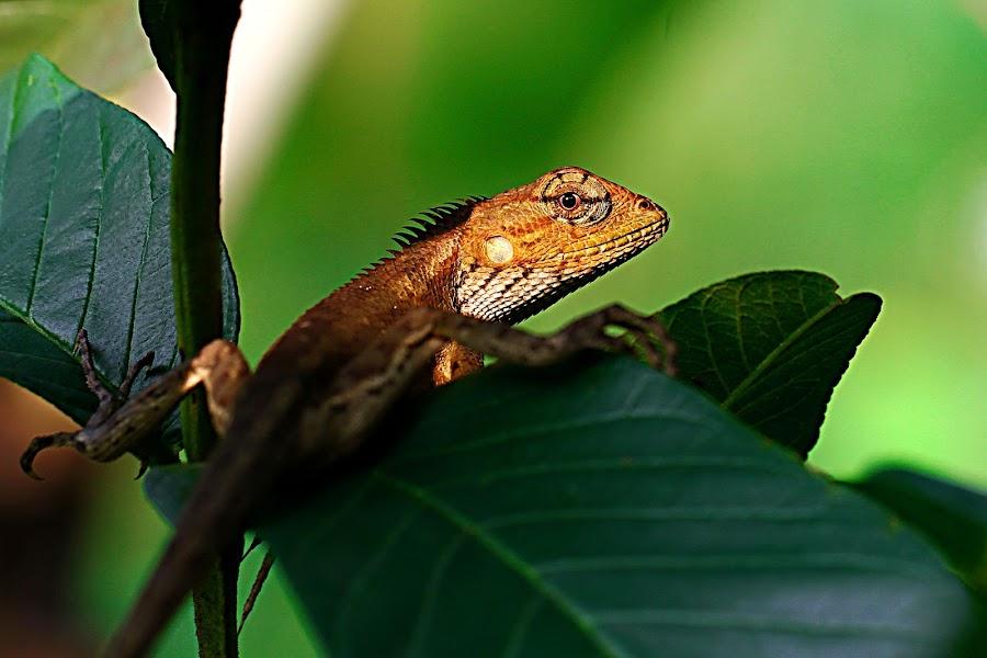 by Hendar Vw - Animals Reptiles