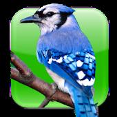 BirdWatch Calendar
