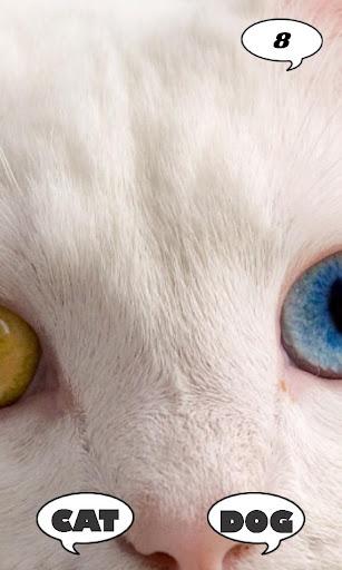 玩益智App|Cat Or Dog免費|APP試玩