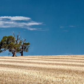 by Dwayne Flight - Landscapes Prairies, Meadows & Fields (  )