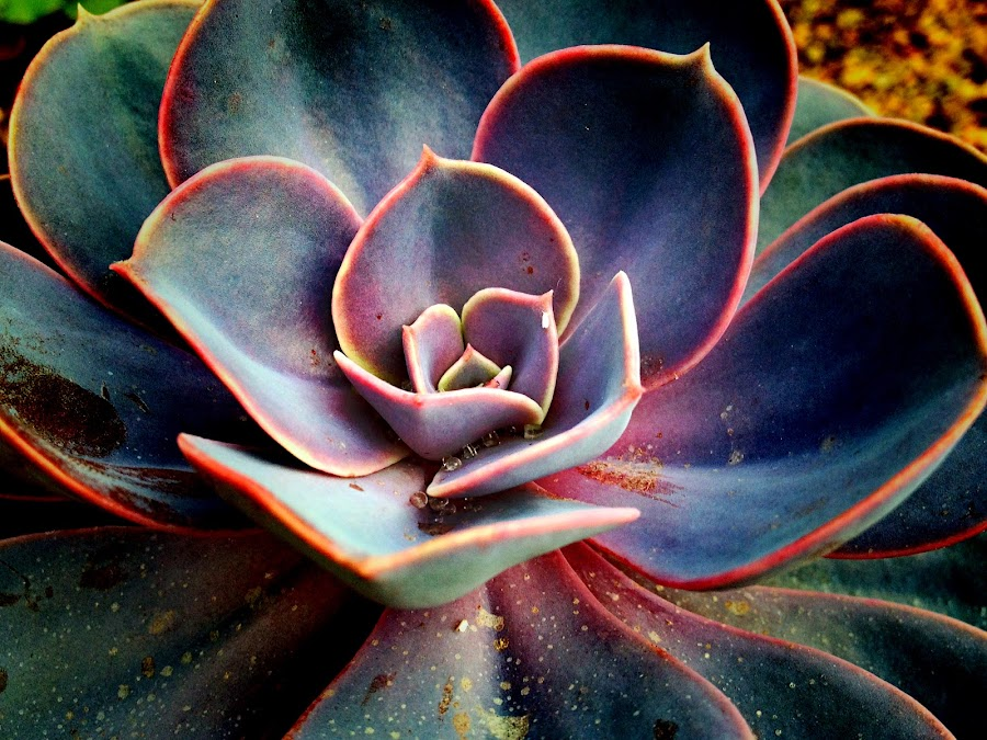 by Janette Ho - Nature Up Close Other plants (  )