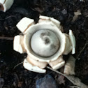 rounded earth star