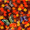 Red leaves & Butterfly Trial icon