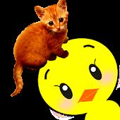 Peekaboo TTTouch! (animal)