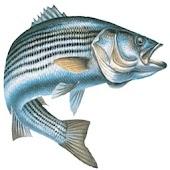 Chesapeake Bay Sport Fishing