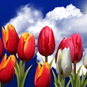 Flowers HD Live Wallpaper icon