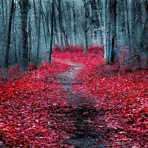 Walk_the_Path-2048-1152.jpg