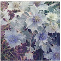 Sea Holly / Eryngium maritimum