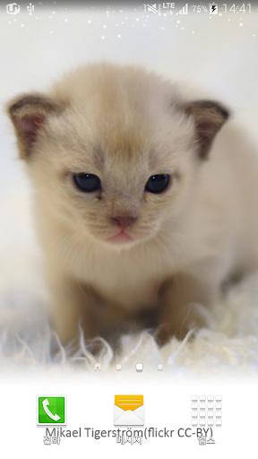 보송보송한아기고양이배경