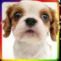 Dog sniffs screen wallpaper icon