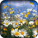 Chamomile wallpapers icon