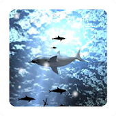 Shark Live Wallpaper free