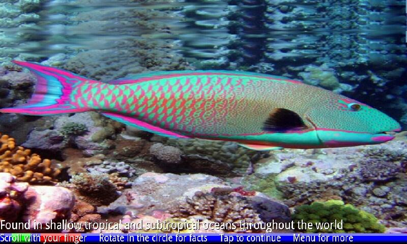 Fish of the Coral Reef 1 FREE- screenshot