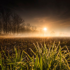 Lights of a new day by Alberto Ghizzi Panizza - Landscapes Sunsets & Sunrises ( foggy, fog, dew, meadow, trees, sunrise,  )