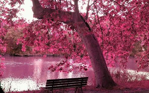 粉红色的动态壁纸