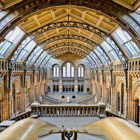Here is a photograph I took from The Natural History Museum.  Located in London, England, UK. by Michael D Beckwith - Buildings & Architecture Other Interior