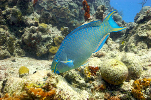 Cozumel-blue-fish - The waters around Cozumel, Mexico, are a wonder for scuba divers and snorkelers.