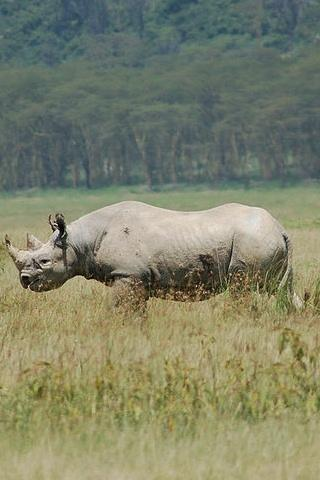The Amazing Farting Rhino