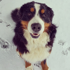 The Star of the show. by Rusty Jhorn - Animals - Dogs Portraits