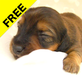 Puppy calendar Free