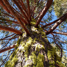 Red green & blue by Paul Stanley - Nature Up Close Trees & Bushes ( sequoia,  )