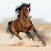 Horse Puzzle Jupe