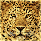 Gepard Live Wallpaper icon