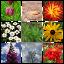 Foto Medley – Plant Photos logo