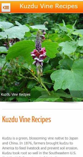 Kudzu Vine Recipes