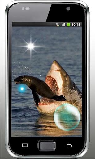 Shark Danger HD live wallpaper