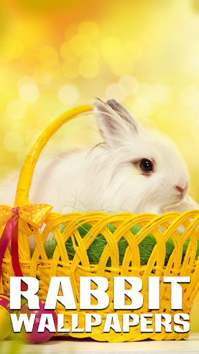 Rabbit Wallpapers with Puzzle