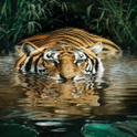 Tiger River Live Wallpaper icon