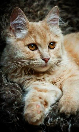 Beautiful cats wallpaper
