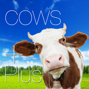 Cow Posters and Pictures Plus