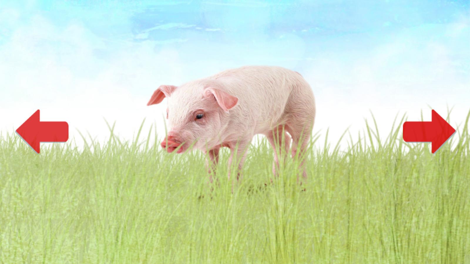 Dieren voor Peuters & Baby - screenshot