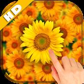 Sunflower Falling Wallpaper