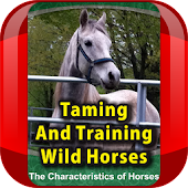 Taming and Training Wild Horse