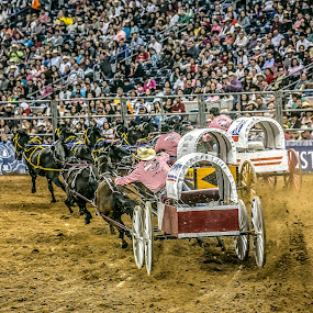 Rodeo Wagon Race by Perry Churchill - People Street & Candids