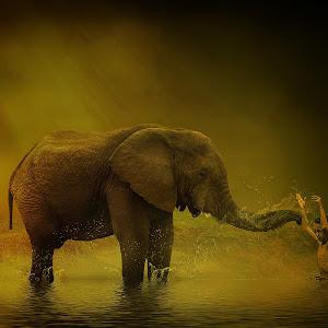 mandi ma gajah.jpg