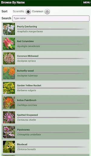 Minnesota Wildflowers Lite