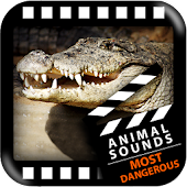 Most Dangerous Animals Sounds