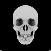Skull 3D Live Wallpaper
