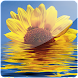 3D Sunflower II